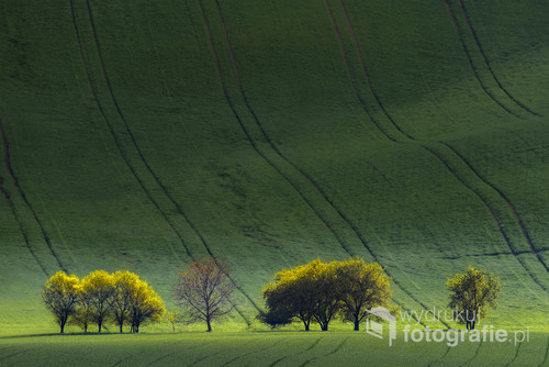 Moravian evening landscape, south Moravia, Czech Repuplic, Europe