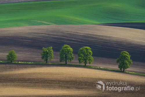 Moravian spring fields on South Moravia, Czech Repuplic, Europe