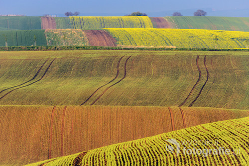 Colorful wavy hills in South Moravia, Czech Republic