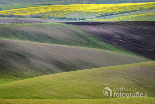 Wavy hills during spring time in South Moravia, Czech Republic