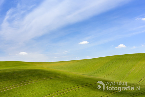 Field of green grain and cloudy blue sky on South Moravia, Czech Republic