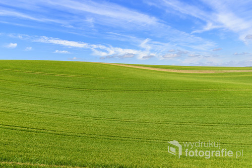 Wavy green field with cloudy blue sky on South Moravia, Czech Republic