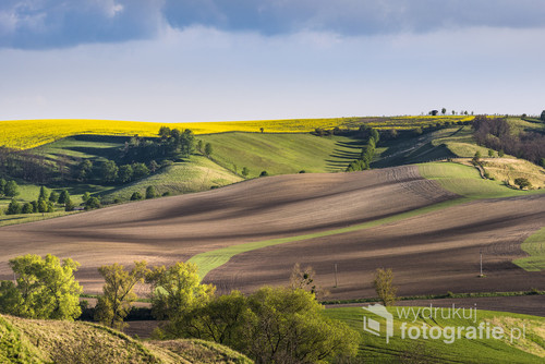 Wavy fields in the evening on South Moravia, Czech Republic