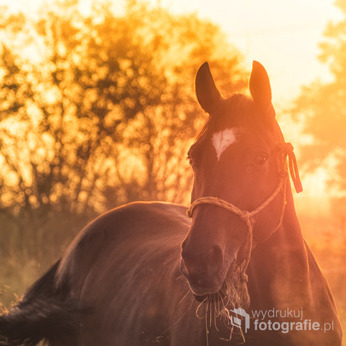 W jednej z podkrakowskich wsi fotografowałem mgłę na polach o świcie. Kiedy nagle zauważyłem gospodarza wyprowadzającego konie na wypas. Trudno było nie skorzystać z takiej okazji.