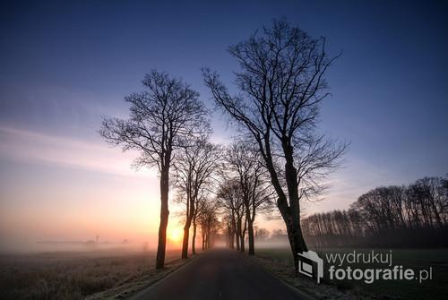 Droga miedzy drzewami w światle poranka