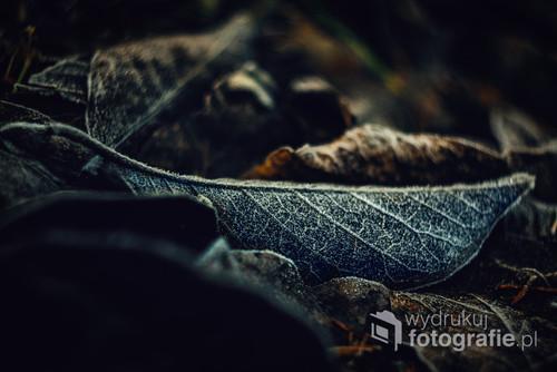 Poranna wędrówka po lesie. Mały przymrozek dodaje uroku.