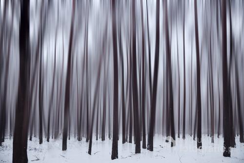 Mała abstrakcja na temat lasu.