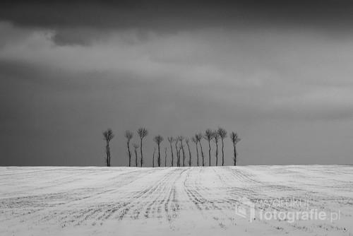 Samotnie stojące drzewa w biało-czarnej odsłonie