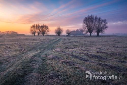 Poranek na łąkach