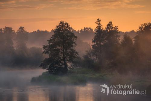 Drzewo nad Pilicą w mglisty poranek