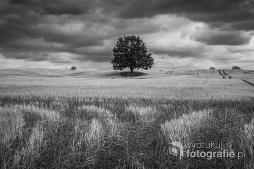 Samotne dzewo