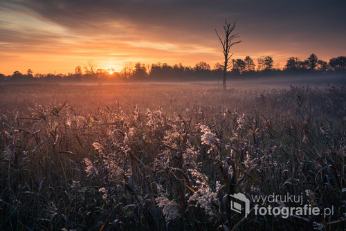 Wschód słońca na łące