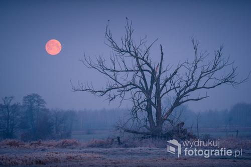 Pełnia księżyca w dolinie Jeziorki