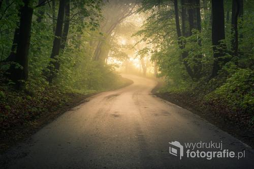 Droga przez las w mglisty poranek