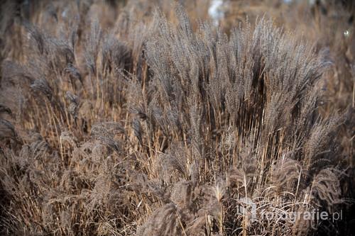 Trawa, wiosna, wiatr, słońce. Spokojne, neutralne zdjęcie do każdej przestrzeni dla ceniących naturę.