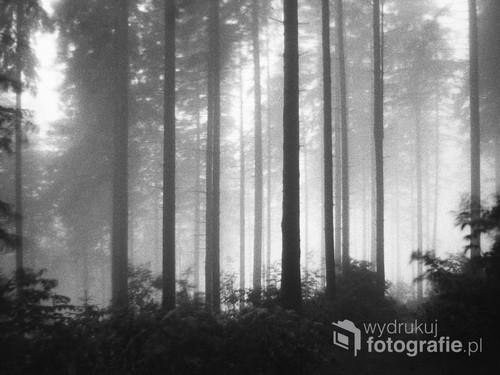 Tego lasu już nie ma! Zdjęcie z lat 1980-85, widoczne naturalne ziarno kliszy, minimalna ingerencja w obróbce. Beskidy, błotnista jesień.