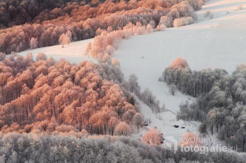 Bieszczadzki zimowy krajobraz. Las na zboczu Wielkiej Rawki podświetlony pierwszymi promieniami wschodzącego słońca.