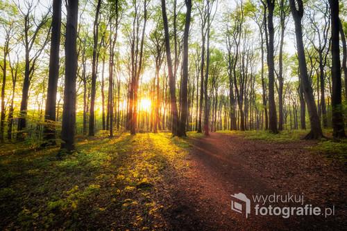 Rezerwat przyrody Segiet znajduje się na granicy Bytomia i Tarnowskich Gór. Piękny las, porośnięty bukami, skrywa w sobie wiele tajemnic. Ponadto jest to świetne miejsce do spacerów.