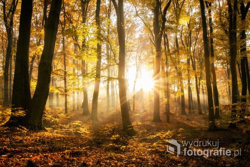 Promienie zachodzącego słońca, przedzierające się pomiędzy drzewami repeckiego parku.