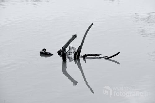 Korzeń porwany przez rzekę.