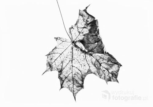 Tym razem trochę eksperymentów z jesiennym liściu w czerni i bieli.