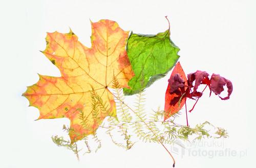 Zabawa w studiu w jesiennymi liśćmi.