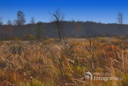 Jesień powoli zbliża się do końca. Zdjęcie zrobione w drugim tygodniu listopada.