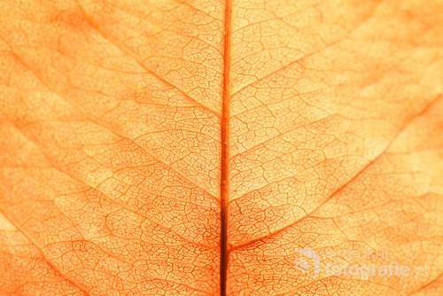 Pożółkły jesienny liść.