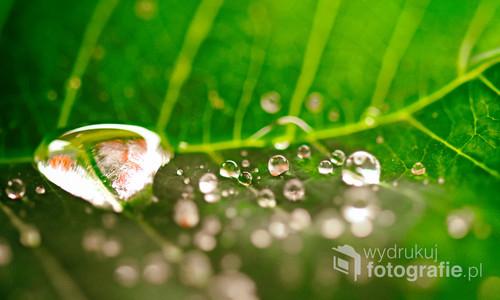 Zielony liść pokryty kroplami.