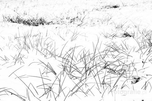 Śnieg i wystające kępki trawy były inspiracją do zrobienia tego zdjęcia.