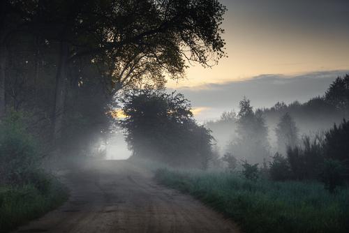 Fotografia przedstawia ścieżkę leśną prowadzącą nad plażę w miejscowości Lubiatowo.