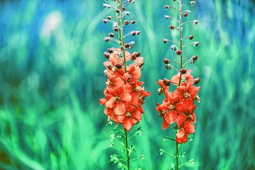 kwiaty nieoczywiście