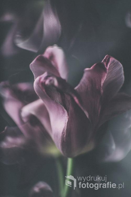 Kolejna seria zdjęć, tym razem kwiaty Przekwitłe tulipany wcale nie są brzydkie... :)