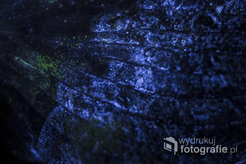 Kosmos... który nie jest kosmosem. Zdjęcie z serii pod tytułem 400 nm ponieważ wszystkie zdjęcia powstawały jedynie przy świetle UV. W przypadku tej fotografii to pomalowane fluorescencyjną farbą liście funkii. Chętnych zapraszam na stronę nataliajuras.pl - tam znajdują się wszystkie zdjęcia z serii.