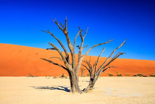 Po wdrapaniu się na wydmę na pustyni Namib moim oczom ukazało się martwe jezioro Dead Vlei. To tu 200 lat temu rosły piękne akacje - teraz wyschnięte ich konary tworzą niesamowite widoki - miejsce to jest jedną z głównych atrakcji Parku Narodowego Namib Naukluft.