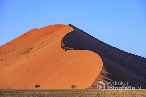 Park Narodowy Namib Naukluft Namibia 2018 Kilka minut po wschodzie słońca rozpoczyna się spektakl światła i cieni, który trwa przez cały dzień. Wydma 45 nigdy nie wygląda tak samo ponieważ piasek jest przenoszony przez wiatr i grzbiet jest w rożnych miejscach.