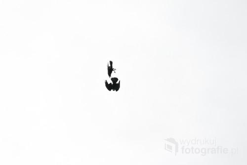 Minimalistyczne zdjęcie przedstawiające walkę dwóch ptaków.