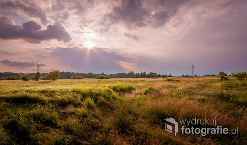 Łąka rozświetlona popołudniowymi promieniami słońca.Spontaniczne zdjęcie wykonane przy okazji spaceru z psem.