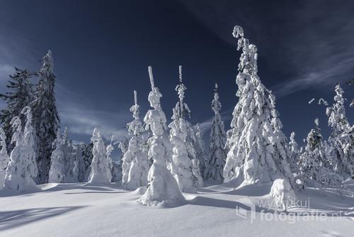 Słoneczna pogoda sprzyja górskim wędrówkom, a gdy warunki są dobre to wato zabrać ze sobą aparat. Zdjęcie powstało na szlaku między Szyndzielnią a Klimczokiem w Beskidzie Żywieckim