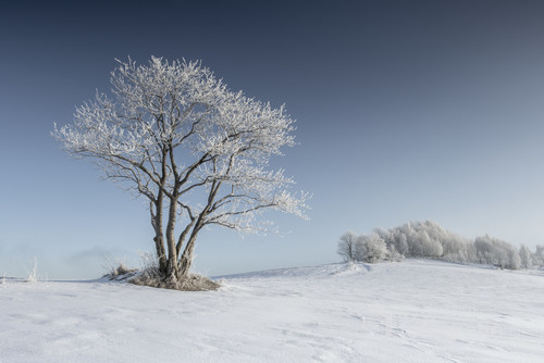 Zima to bardzo dobry temat do fotografii przyrody, mimo, że uśpiona to bardzo zachwycającą. Mroźny poranek w Beskidach