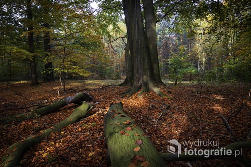 Fotografię wykonałem w lesie w okolicach Katowic. Tego dnia światło było idealne, pozwalało wydobyć piękne kolory jesieni. Dzięki powalonym drzewom na pierwszym planie możemy kierować swój wzrok w głąb kadru pozwalając zanurzyć sięnaszą wyobraźnią w głębi tego lasu.
