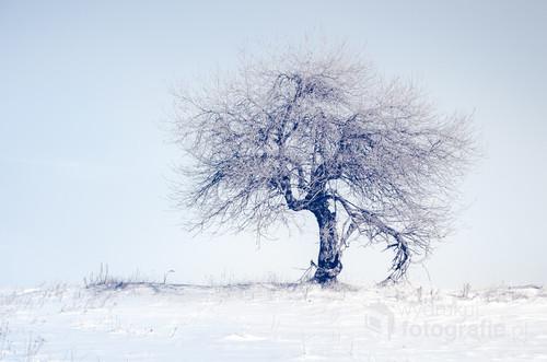 Zdjęcie zostało zrobione zimą. Zdjęcie prezentuje się ładnie wydrukowane z białą ramką a następnie połączone z ciemniejszym passe-partout.