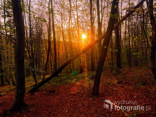 Fotografia wykonana w Beskidzie niskim , przedstawiająca drzewo chylące się ku upadkowi ;)