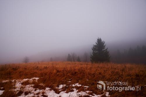 Fotografia została wykonana w Jaśliskim Parku Krajobrazowym