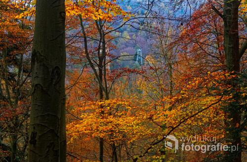 Fotografia przedstawia jesienny bukowy las