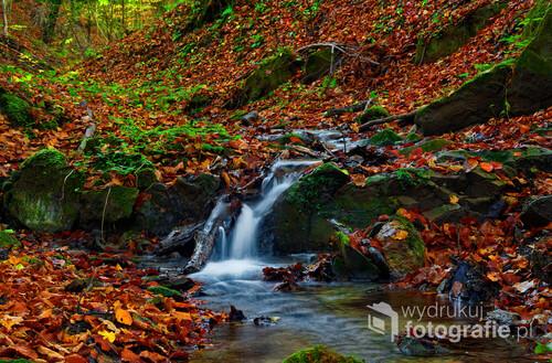 fotografia przedstawia jesienny potok