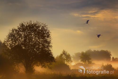 Poranek jak poranek ale gdy słońce przyświeci zaczyna się spektakl.