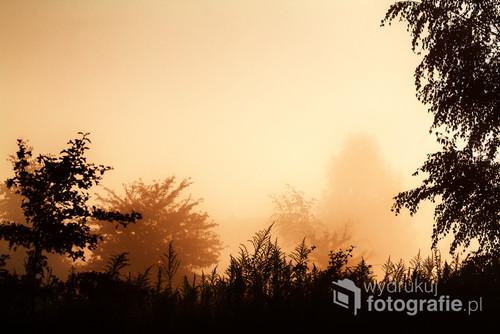 Okolice Krakowa-Uroczysko Skotniki. Fotografia robiona wczesnym zamglonym porankiem pod słońce.