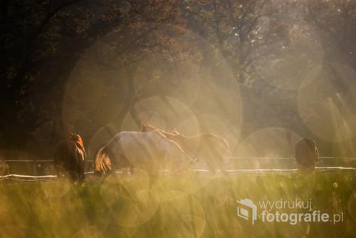 Błonia – park miejski w postaci rozległej łąki (dawniej pastwisko gminne) o powierzchni 48 ha i obwodzie ok. 3587 metrów, położony w (prawie centrum) Krakowie. Dzisiaj również od czasu do czasu wypasane są zwierzęta.