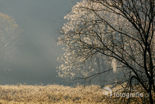 Puszcza Niepołomicka z satelity, Landsat 8, wrzesień 2013  Krajobraz Puszczy Niepołomickiej, 23 maja 2010  Miejsce rekreacyjne  Rezerwat przyrody Dębina Puszcza Niepołomicka – kompleks leśny znajdujący się w zachodniej części Kotliny Sandomierskiej, ok. 20 km na wschód od Krakowa. Zajmuje teren położony w widłach Wisły i Raby. Składa się z kilku oddzielnych kompleksów, niegdyś stanowiących jedną całość. Główny kompleks zajmuje powierzchnię ok. 110 km². Rozciąga się on między Niepołomicami, a Proszówkami, Baczkowem i Mikluszowicami. Nazwa Puszczy Niepołomickiej wywodzi się od staropolskiego słowa niepołomny, czyli niemożliwy do pokonania, zniszczenia, wytrzebienia. Przypuszcza się więc, że stąd właśnie pochodzi drugi człon nazwy puszczy. Zatem dawniej puszcza niepołomna byłaby lasem trudnym do wykarczowania, do zagospodarowania rolniczego, bardzo niedostępnym.